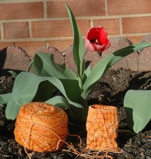 tulip and sock